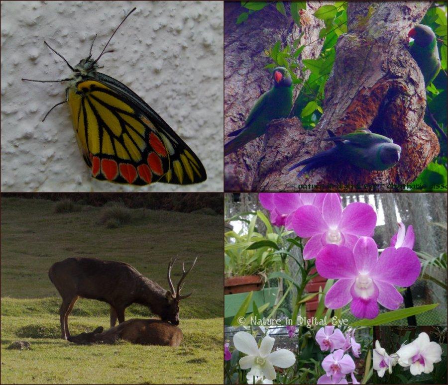 flaora-fauna