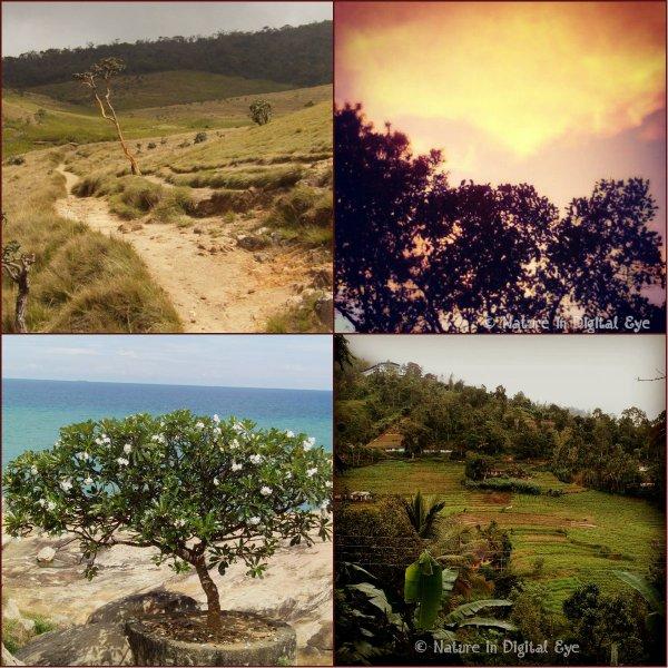 sceneries